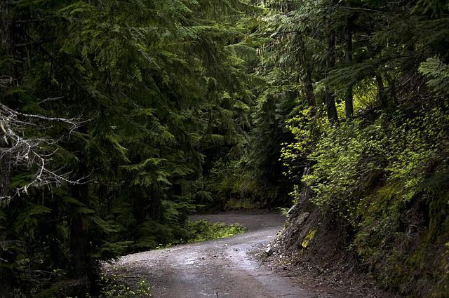 Forest, Trees, Green, Sunlight, Road, Path, Travel