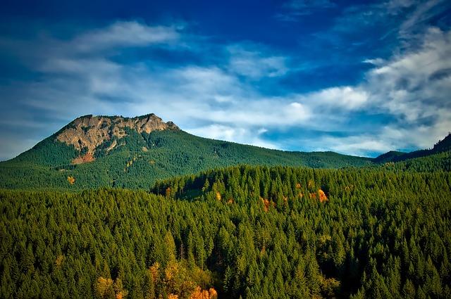 Pinchot National Forest, Washington, Trees, Woods