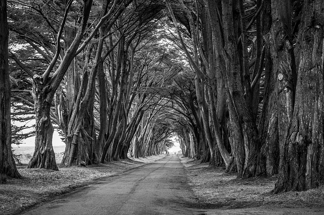 Branches, Park, Road, Scenic, Travel, Trees