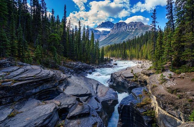 River, Rocks, Trees, Conifer, Stones, Creek, Stream