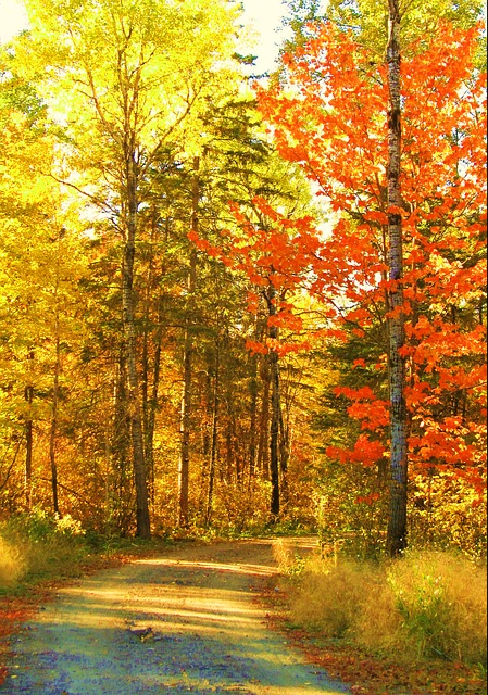 Autumn, Fall, Trees, Nature, Roadway, Path, Season