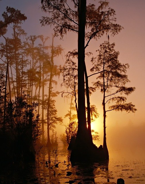 Swamp, Trees, Sunset, Silhouette, Woods, Foliage