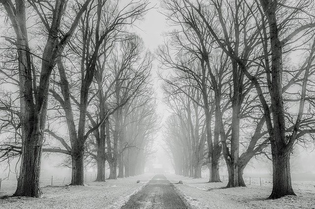 Winter, Snow, Trees, Road, Travel, Fields, Rural, Cold