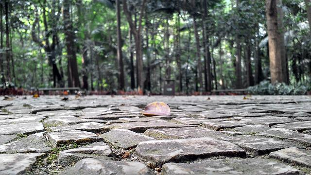 Park, Sidewalk, Stones, Trees, Floor