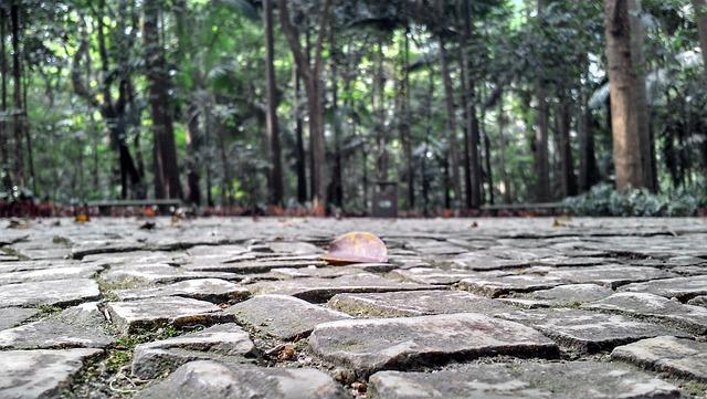 Park, Sidewalk, Stones, Trees, Floor