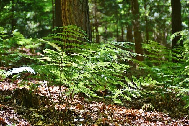 Ferns, Forest, Trees, Glade, Mood Light, Sun, Spring