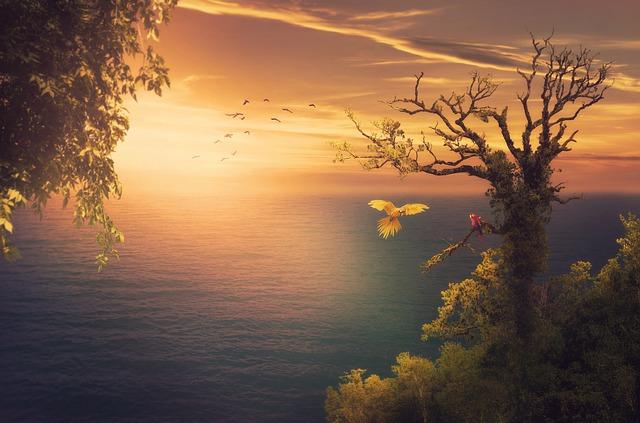 Sea, Sunset, Trees, Parrots, Sunlight, Background