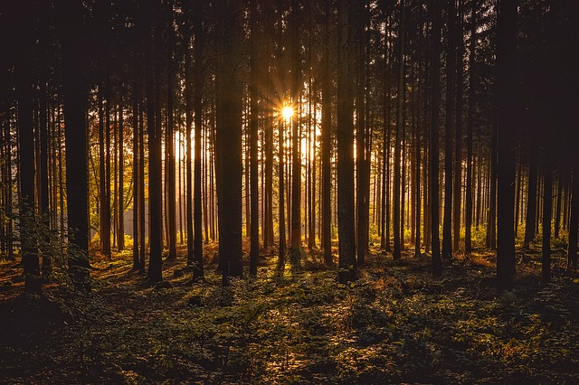 Landscape, Silhouettes, Forest, Trees, Woods, Sunlight