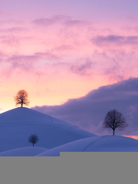Hills, Winter, Sunset, Snow, Trees, Frost, Wintry, Cold