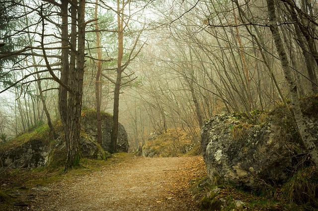 Wood, Forest, Nature, Plants, Leaves, Trees, Trail