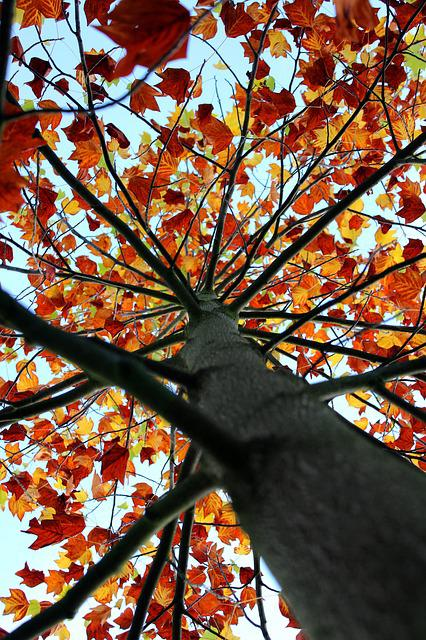 Tree, Foliage, Autumn, Trees, Nature, Leaves, Branch