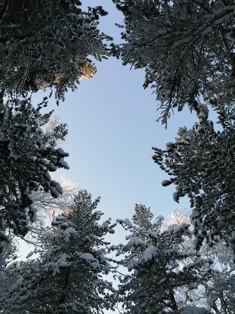 Winter, Nature, Trees