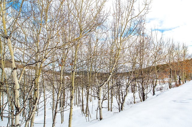 Yukon, Canada, Snow, Forest, Trees, North, Nature