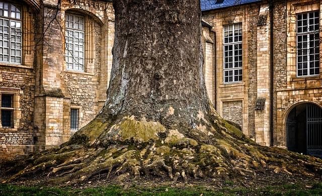 Tree, Tribe, Log, Tree Bark, Thicker Stem, Root, Wood