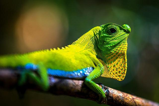 Living Nature, Lizard, Tropical, Animals