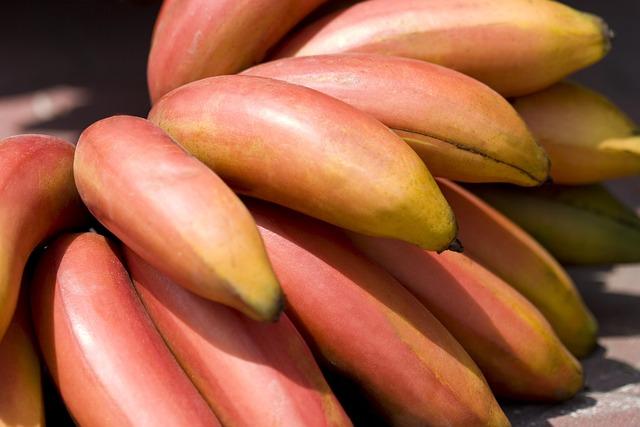 Apple Banana, Fruit, Tropical, Growth, Planting, Plant