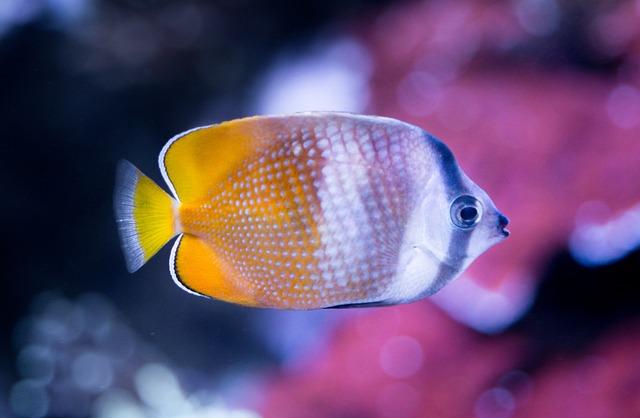 Tropical, Fish, Tank, Ocean, Underwater, Aquarium