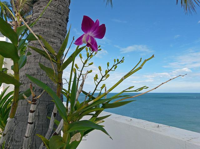 Orchids, Flowers, Tropical, Asia, Thailand, Plant