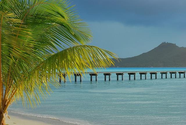 Tropical Beach, Palm Tree, Bora Bora, White Sand