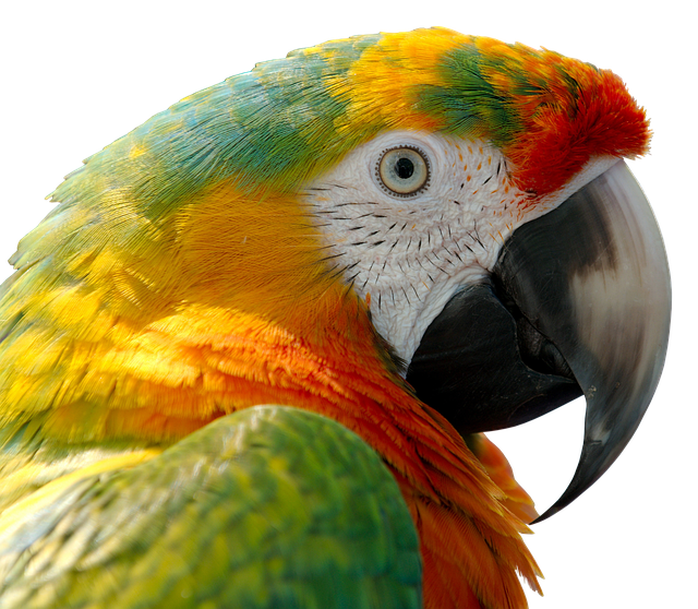 Parrot, Bird, Feather, Ara, Bill, Tropical, Exotic