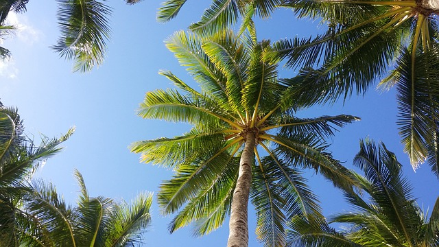 Palm Tree, Sky, Boracay, Tropical