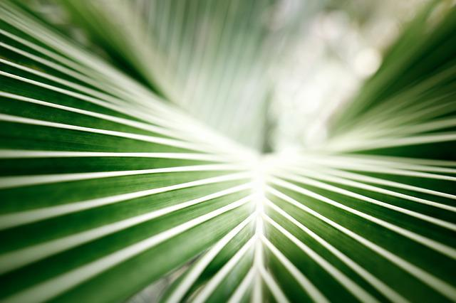 Coconut Leaf, Palm, Tropical, Green, Closeup