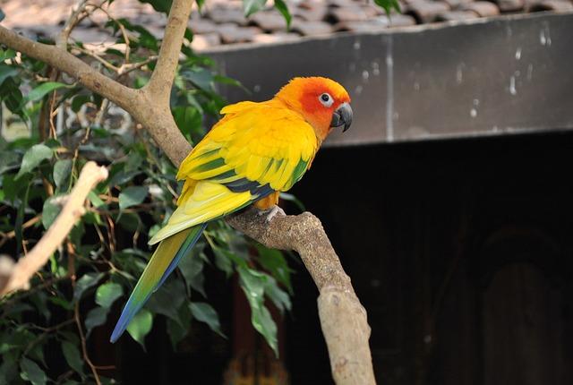 Bird, Animal, Tropical, Conure, Sun Conure, Feather