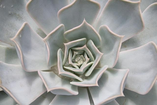 Cactus, Tropical, Tropics, Exotic, Plant, Green, Flora