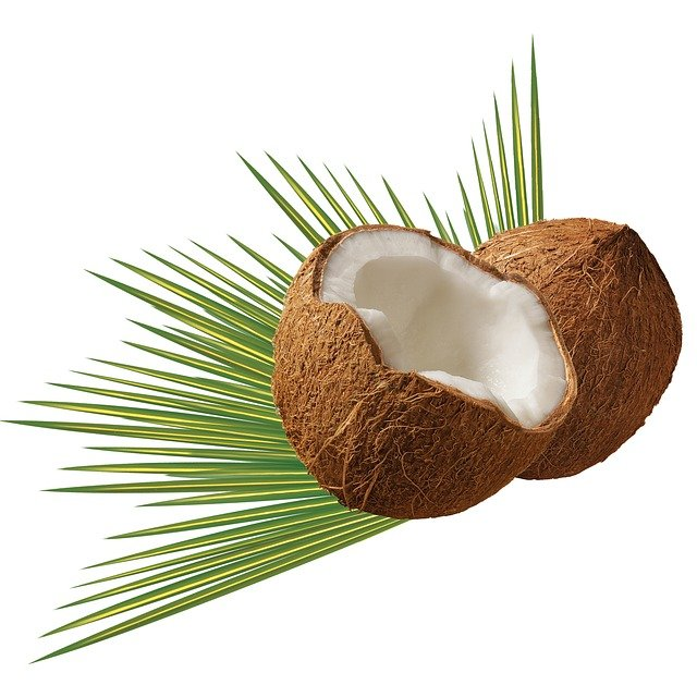 Coconut, Leaf, Green, Tropical, Palm, Nature, White