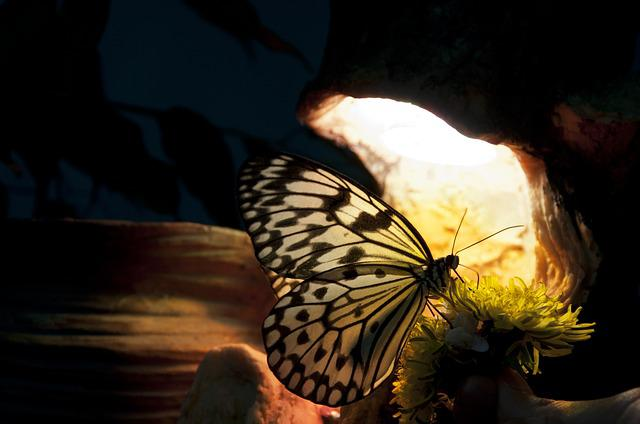 Butterfly, Yellow, Tropical, Big, Play Of Light