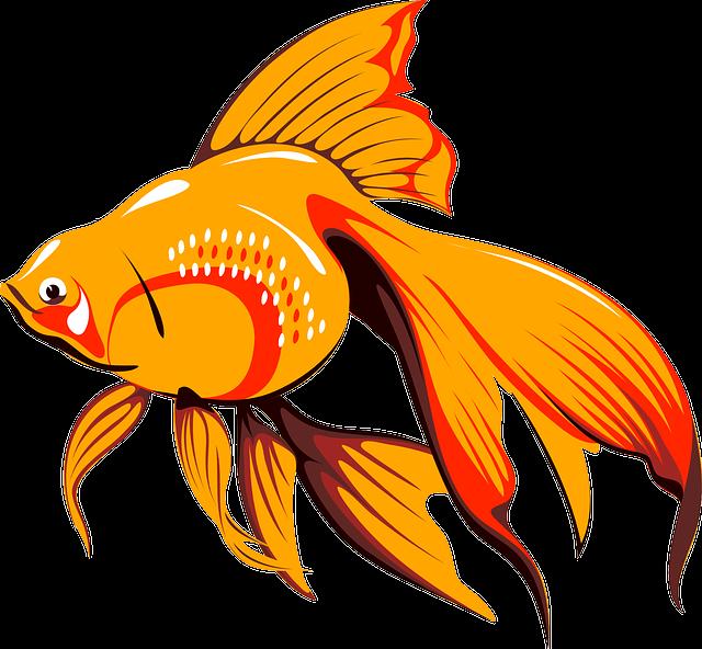 Goldfish, Fish, Tank, Water, Tropical, Swim, Animal