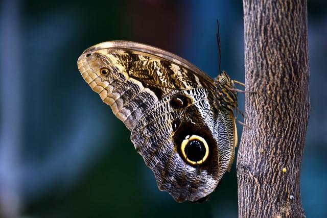 Butterfly, Owl Butterfly, Tropical, Tropical Butterfly