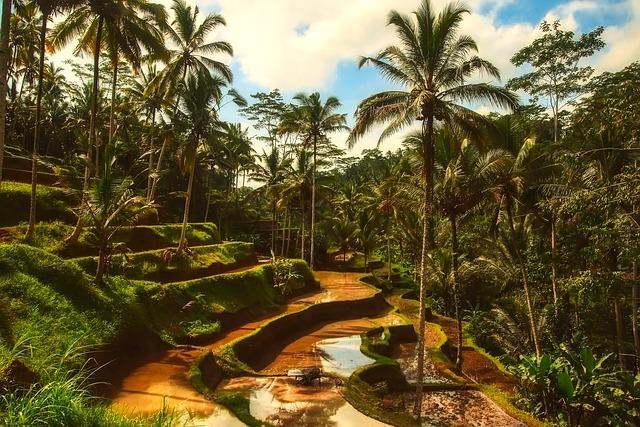 Bali, Tropics, Tropical, Palm Trees, Forest, Sky