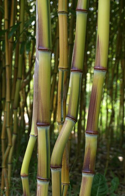 Bamboo, Zen, Plant, Tropical, Tropical Vegetation