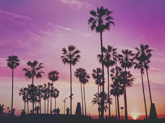 Tropical, Palm Trees, Miami, Los Angeles, Venice