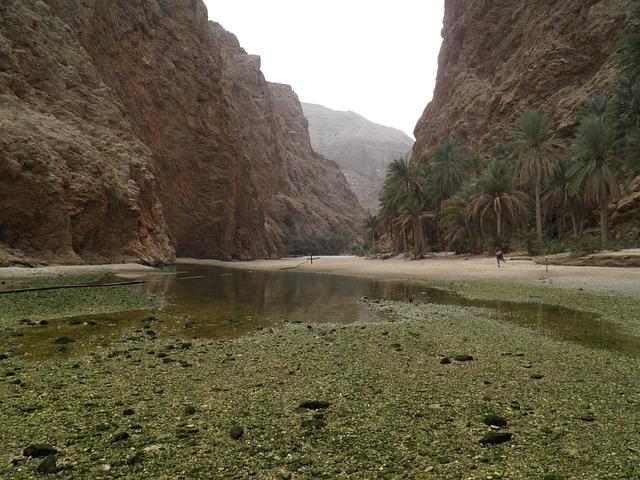Wadi, Oman, Nature, Exotic, Tropical, Palm Trees