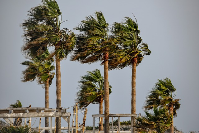 Tree, Palm, Tropical, Wind, Storm, Weather, Nature