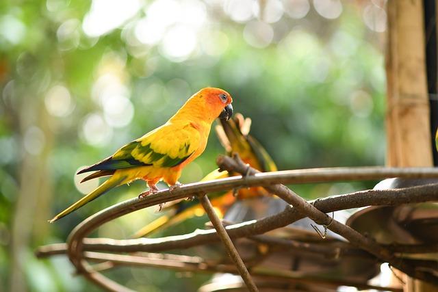 Bird, Wildlife, Nature, Tropical, Animal