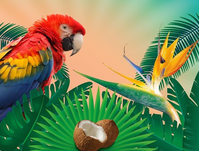 Tropics, Summer, Summer Holiday, Holiday, Sun, Jungle
