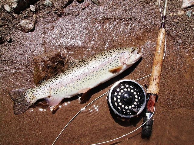 Trout, Fishing, Return, Ecology