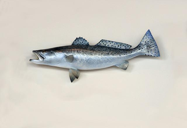 Saltwater, Sea Trout, Trout, Fish, Fishing, Mounted