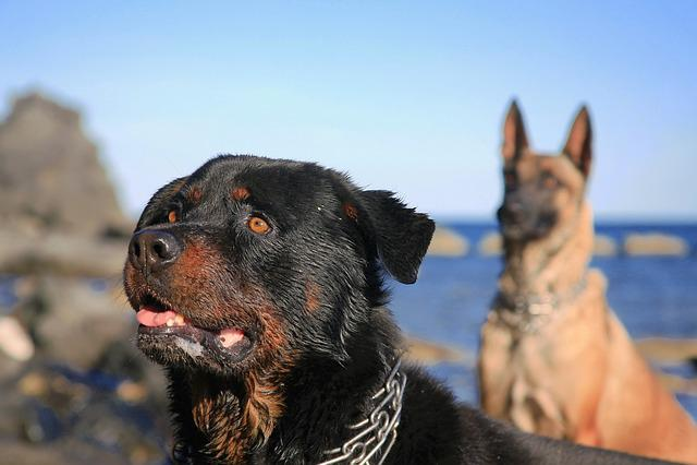 Dog, Canine, Truffle, Domestic Animal, Race, Doggie