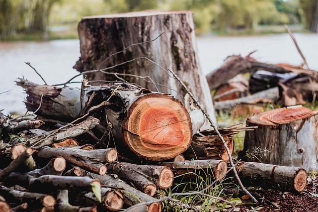 Wood Cut, Wood, Nature, Floor, Trunk, Cut, Old Tree