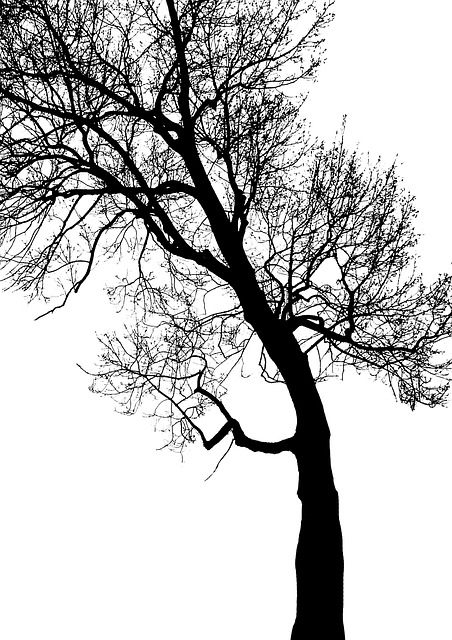 Tree, Branch, Trunk, Foliage, Contrast, Winter, Forest