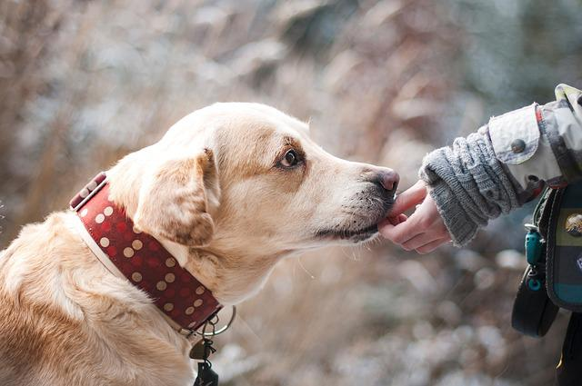 Dog, Friendship, Nature, Trust, Labrador, Snout, Pet