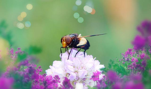 Trzmielówka Forest, Muchówka, Eye, Flower, Apiformes