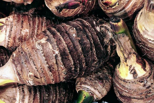 Taro Root, Tuber, Caladium, Root, Tropical, Plant