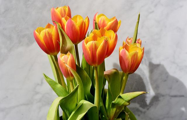 Tulip, Tulip Bouquet, Blossom, Bloom, Spring Flowers