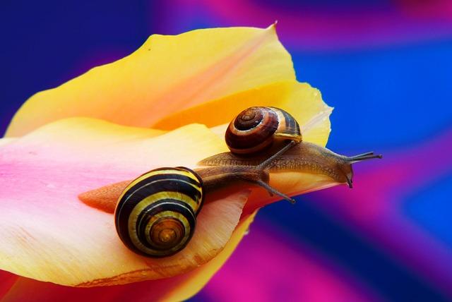 Wstężyki Gajowe, Molluscs, Flower, Tulip, Graffiti