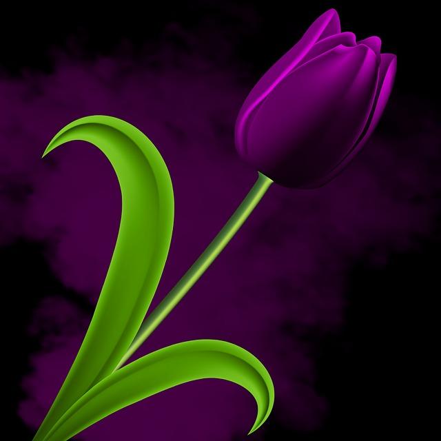 Nature, Plant, Flower, Leaf, Tulip, Tulipan Violet